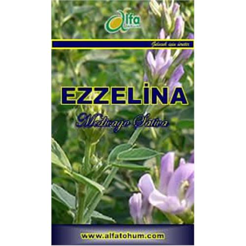 EZZELiNA Clover - Forage Crops Seed