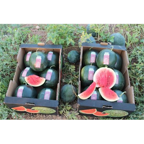 Fully Original, Eu Organic Watermelons